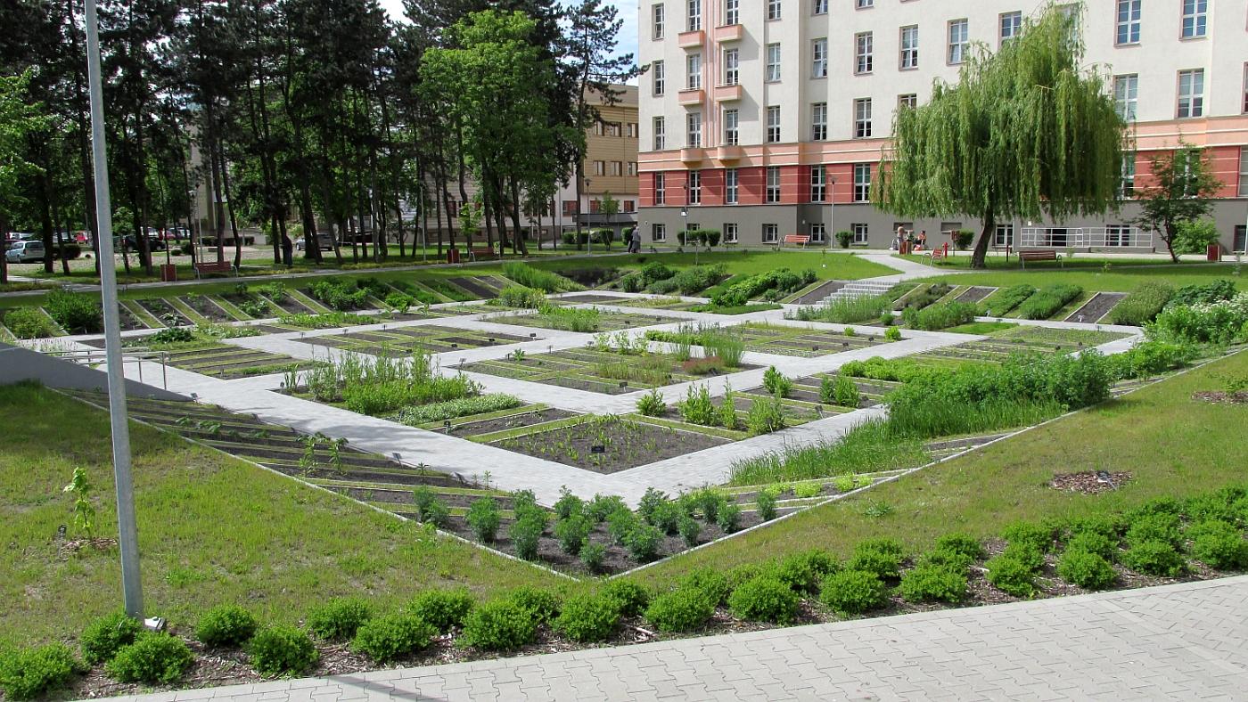 Ogród Roślin Leczniczych i Kosmetycznych Wydziału Farmaceutycznego